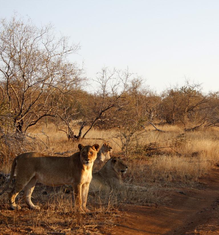 Self-Drive South Africa's Kruger Park