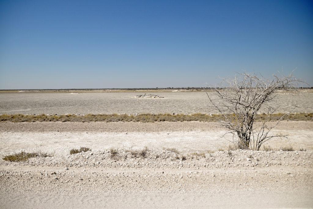 Dry landscape in Etosha National Park in Namibia