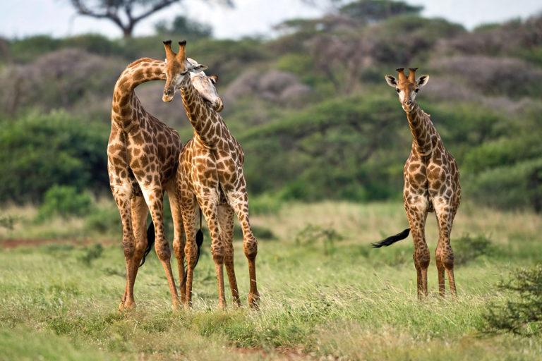 Where to go on safari in Africa: Our tips for Tanzania, Kenya, Namibia, and South Africa