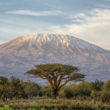 Mt Kilimanjaro and its snow-capped peaks; an Acacia tree in the foreground