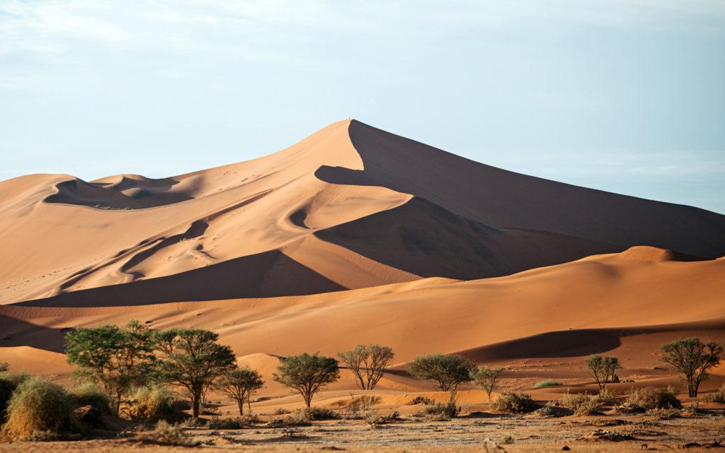 High sand dunes and trees in Sossusvlei, Namibia