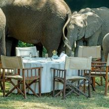 Elephants surrounding a set table at Governors Camp in Kenya