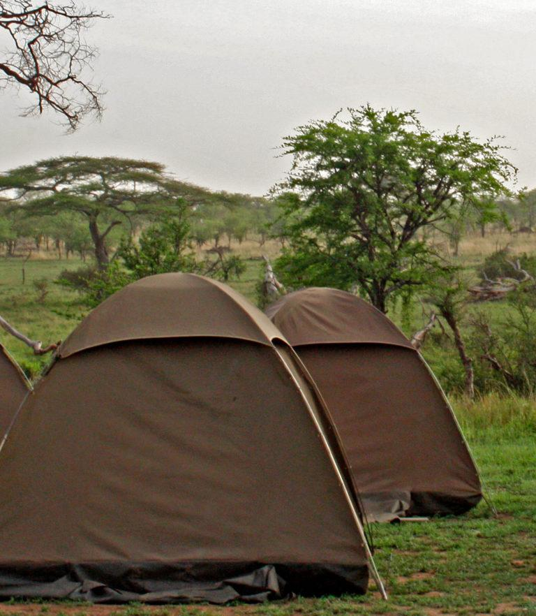 Tents on a campsite facing the green and lush savannah of the Serengeti National Park