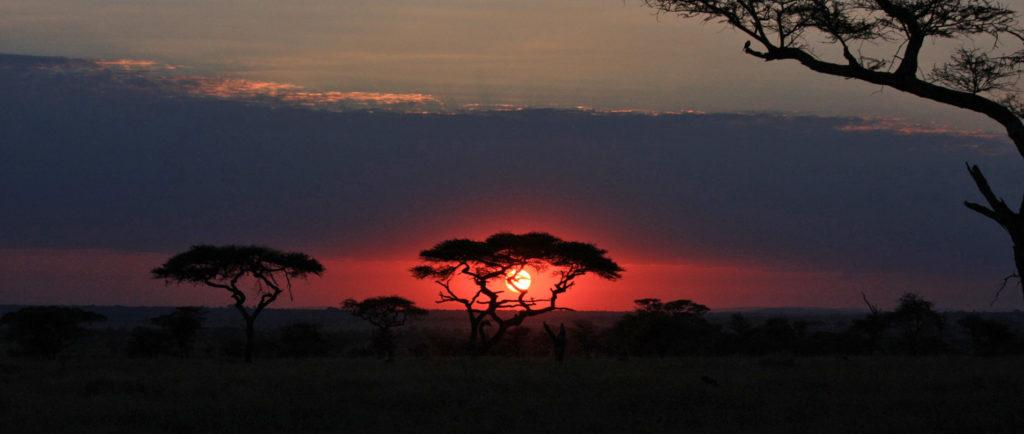 A red and pink coloured sunset behind Acacia trees in the savannah