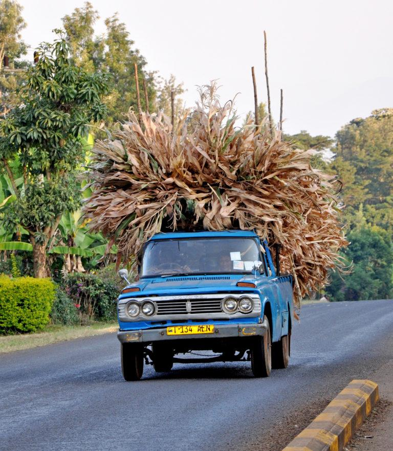A small blue truck heavily loaded with dry leaves drives down a road
