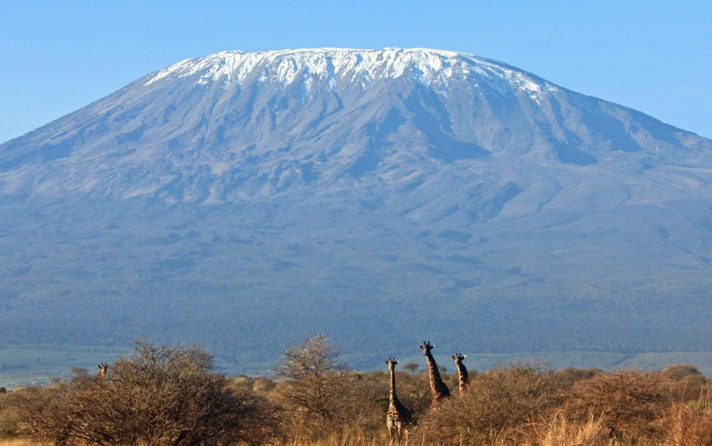 Three giraffes looking at the camera against the backdrop of Mt Kilimanjaro