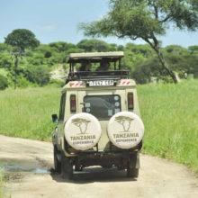 The back of a safari vehicle on a road in Tarangire National Park, Tanzania