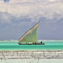 A dhow fishing boat with a white sail in turquoise water off the beach in Zanzibar