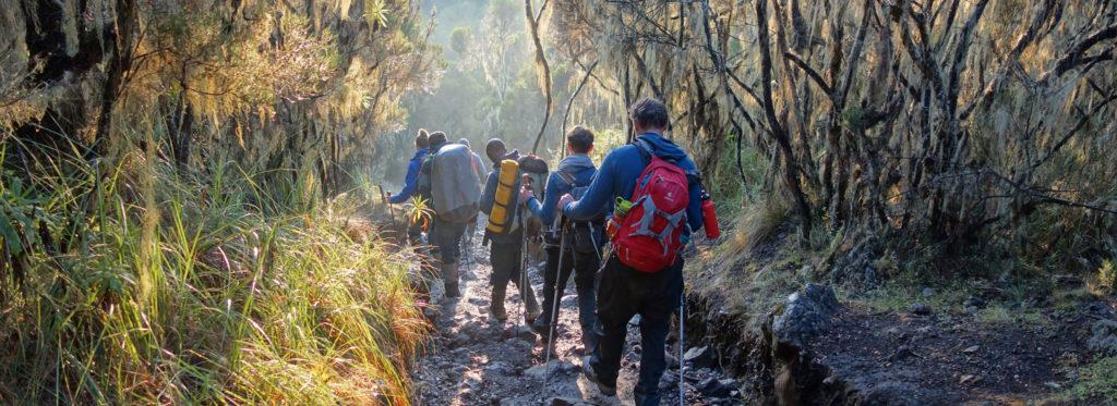 A group of hikers walking downhill after their Kilimanjaro climb