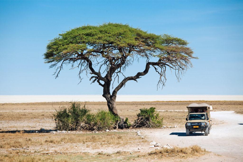 Vehicle tree Etosha national park covid Namibia